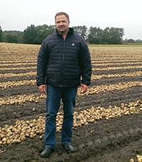lægning af kartofler